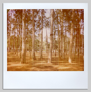 Chandigarh polaroids for sale trees